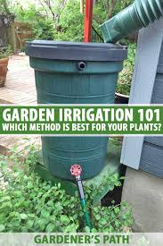 a dark green plastic rain barrel with a gutter hose running into the top and garden