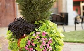 In our pots and planters department you'll find a large variety of containers, grow bags, hanging baskets, patio planters, potting soil, fertilizers, and accessories. Container Gardening Garden Design