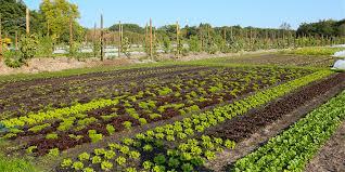 Soutenez les jardins-potagers de Chambord !