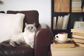 animal friendly furniture. Pet-friendly Apartment, Cats, Living Room Animal Friendly Furniture