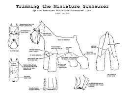 Dog Haircut Chart Cmsr Grooming
