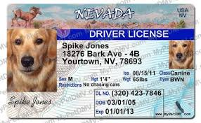 Tag amp; com Nevada Drivers Id Identification Pet - Amazon License Supplies Tags
