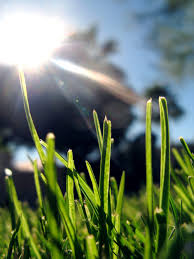 Grass Identification Chart Uk A Quick Guide To British Grass Species The Lawn Man