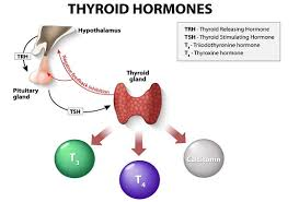 Thyroid Test Range Chart India Nursing Blog Lippincott Nursingcenter T3 And T4 Whats