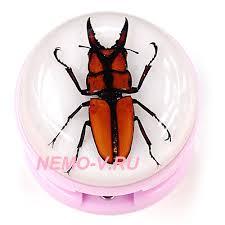 Персональный сайт Насекомые  коллекция насекомых насекомые в акриле насекомые в акриловой смоле насекомые в синтетической смоле