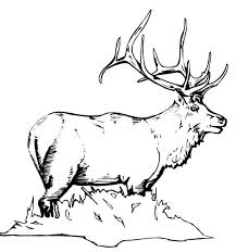 Small Picture Moose Coloring Pages GetColoringPagescom