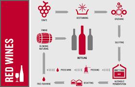 Gastronomy 101 Red Wine Process Oak