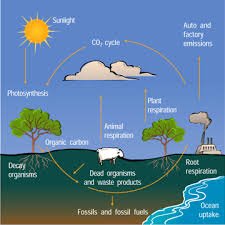 Carbon Cycle Flow Chart The Carbon Cycle