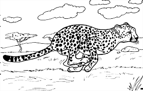 Small Picture Cheetah coloring pages running in savanna ColoringStar