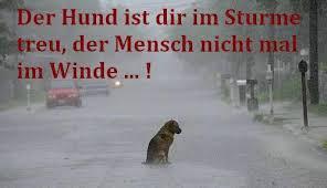 Der Hund Ist Dir Im Sturme Treu Der Mensch Nicht Mal Im Winde