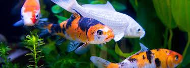petsmart animals fish. Fine Petsmart Article Hero Image On Petsmart Animals Fish Y