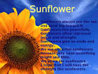 Short essay on sunflower