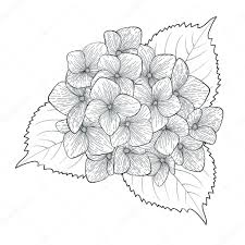 分離された白黒黒と白の花アジサイ ストックベクター