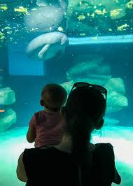 underwater restaurant disney world. Are You Planning A Trip To Walt Disney World With Your Baby? Here My Underwater Restaurant