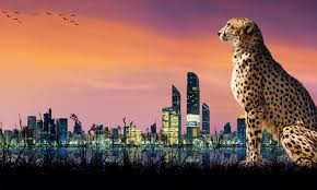 Animal Attractions In The Uae Community Things To Do