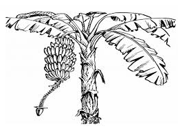 Small Picture Banana Tree Coloring Page Bananas Coloring Pages Free Coloring