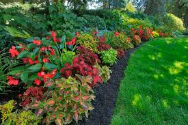 planning landscape for shady areas