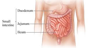 In ec, a type of white blood cell, called the eosinophil, gathers in large numbers in the colon. 15 Difference Between Small Intestine Small Bowel And Large Intestine Large Bowel Viva Differences