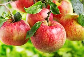 7 Ways For More From Your Apple Harvest - Pioneer Dad