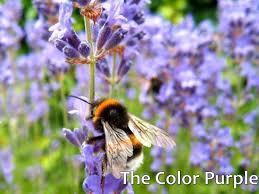 the color purple essay questions
