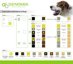 Dog Color Genetics Chart Genomia Coat Color Dogs