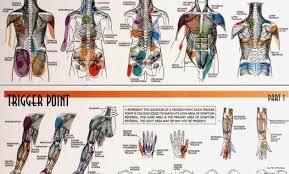 Fibromyalgia Chart 10 Elegant Fibromyalgia Tender Points Chart Images