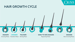 what is hair growth cycle and what are