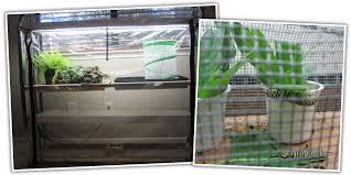 Indoor Gardening Adventures Sarah Pounders U2013 Education Specialist
