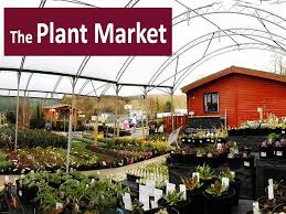 the plant market dunfermline what s