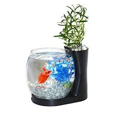 betta fish tanks. Contemporary Tanks Amazoncom  Elive Betta Fish Bowl  Tank With Planter Small  075 Gallon Aquarium LED Light Timer Black Bowls Pet Supplies On Tanks T