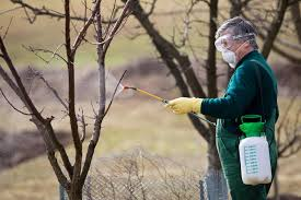 Homemade Fruit Tree Spray  Pest Control OptionsHomemade Spray For Fruit Trees