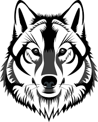 Now that you have the basic head of your wolf mapped out, draw a layer of fur surrounding the head and ears. Easy Wolf Drawing Black And White Novocom Top