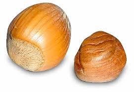 Nut Identification Chart Tree Nut Allergy Wikipedia