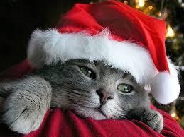 Кошки праздники опасность новый год рождество рождественские  Осторожно Новый год