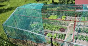 stock photo wide vegetable garden of a house with a hail and bird protection net