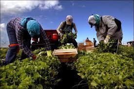 Курсовая Факторы и резервы повышения производительности труда на  Курсовая Факторы и резервы повышения производительности труда на ООО АгроСервисСтандрат Экономика предприятия