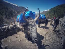 mount everest view trek in nepal 09 days best himas views trek scenic