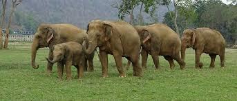<b>Elephant</b> Nature Park
