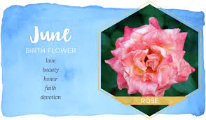 Official Birth Flower Chart Birth Month Flowers And Their Meanings