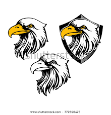 bald eagle template eagle head logo template hawk mascot stock vector 772596475