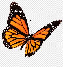 Butterfly graphy editing, butterfly ...