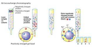 Ion Exchange Chromatography Biologicscorp