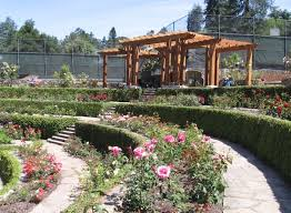 berkeley rose garden arbor reopens completing first part of restoration