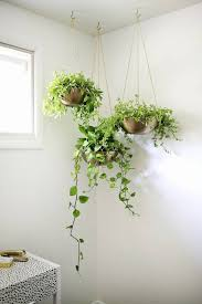 marvellous hanging house plants pictures 92 on modern home design