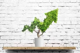 Tree Growth Rates Chart Uk A Stock For Those Searching For Growth In The Uk Markets