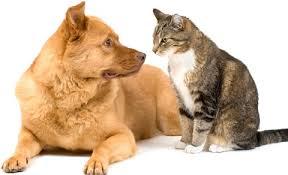 """Résultat de recherche d'images pour """"images de chiens et chats"""""""