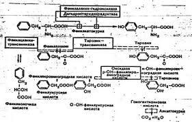 Реферат Наследственные заболевания обмена веществ ru Поступающий с продуктами питания и не используемый для синтеза белка он распадается по тирозиновому пути При ФКУ наблюдается ограничение превращения ФА в