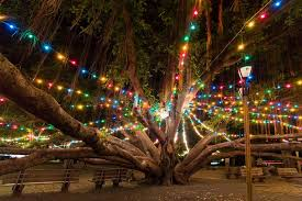 FileMCB Hawaii Christmas Tree Lighting 111204MDX861026jpg Christmas Tree Hawaii