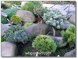 Small Picture 82 best Garden Conifer images on Pinterest Shrubs Garden plants