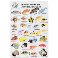 d - Guam Card amp; Fish Micronesia Leisurepro B176 I